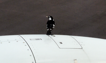 Bird on the engine cowl of 737-800, refuses to move, and delays flight